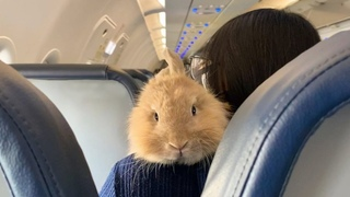 This woman's soulmate is a bunny
