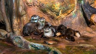 Выдры в Санкт-Петербургском Океанариуме / Otters at the St. Petersburg Oceanarium