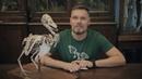 Птицы - это динозавры? Рассказывает Павел Скучас.