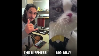 The Kiffness X Big Billy (Live Looping Talking Cat Remix)