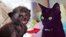 Спасение новорожденного котенка. Большой праздничный выпуск English subtitles / SANI vlog