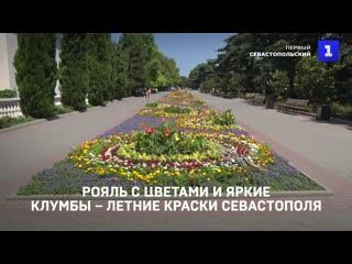 Рояль с цветами и яркие клумбы – летние краски Севастополя